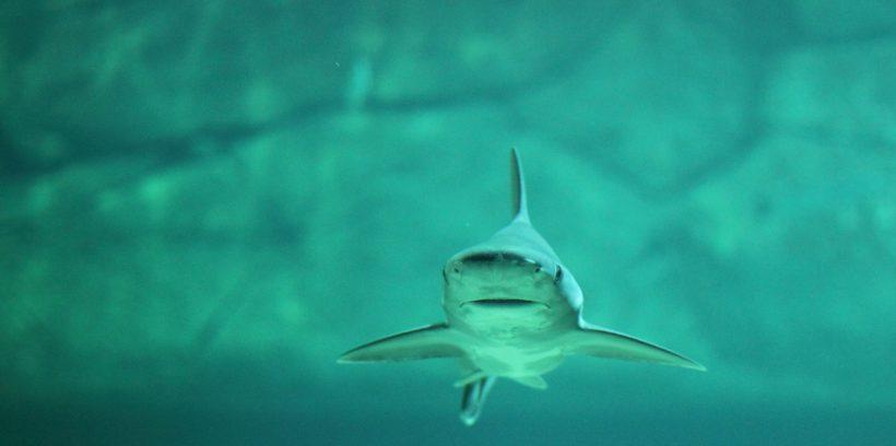Hai - Auge in Auge mit einem Hai