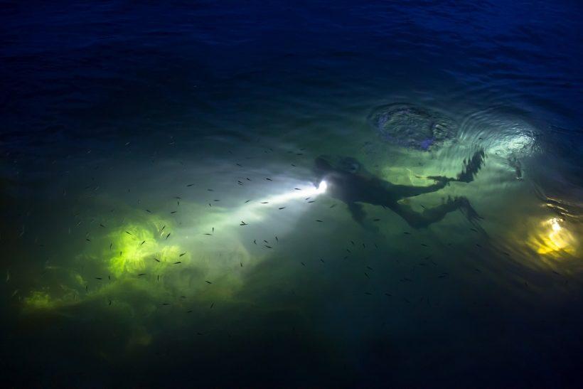 Taucher mit Tauchlampe bei einem Nachttauchgang